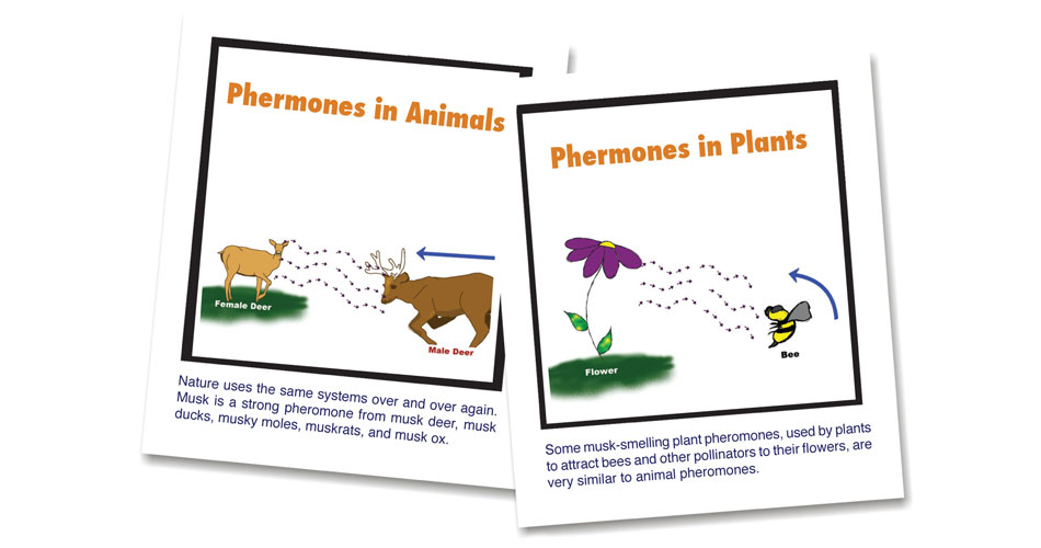 Plant and Animal Pheromones